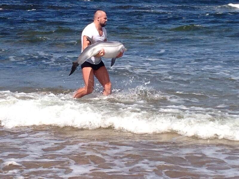 Beached Dolphin Saved