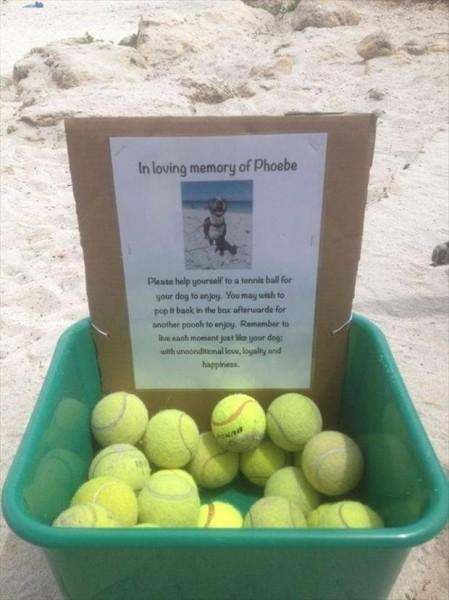 Free Tennis Balls