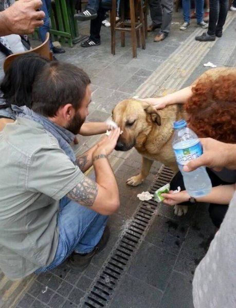 Tear Gassed Dog